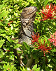 Mostly Iguanas,with a few others,Aruba : I love lizards