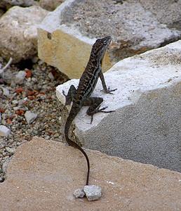 Aruba Feb 06