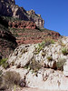 Grand Canyon, Oct 06 : Everyone has to see this place at least once in their life.  Unitl then you can check out this gallery
